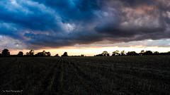 DSC_0244 (timmie_winch) Tags: nikon nikond3000 d3000 august august2016 2016 sun sunset sunsetsuffolk sunsetoversuffolkcountryside sunsetovercornfields sunsetovercornfield silhouette 18105mm 18105vr nikon18105mmvrlens shadows golden goldenhour goldenlight elliedunn ellie eleanordunn ells eleanor ellsdunn dunn landscape landscapephotography landscapephotographer naturephotographer naturephotography nature timwinchphotography tim timwinch winch debenham ip14 suffolk