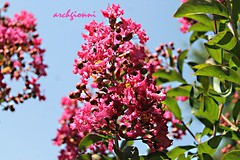 macro (archgionni) Tags: flowers plants nature natura rosa pink cielo sky petali petals foglie leaves macro