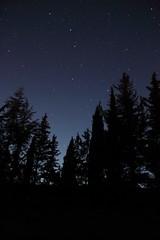 Ambition (mikkelfrimerrasmussen) Tags: stars starry sky night summer dusk tree silhouettes trer skov silhouette nat sommer cruis provence paca france montagne de lure canon eos 100d forest trees