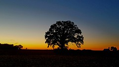 Lonely (LaLa83) Tags: sunset sillhouette sky dusk galaxy samsung 2016 october autumn pickawaycounty ohio