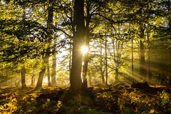 Amanecer en la sierra de Entzia II (joseba71) Tags: serenidad rbol follaje airelibre bosque paisaje landscape tree planta amanecer sunrise nature sun fog niebla fuji fujifilm woods xpro1 forest