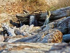 Driftwood Falls