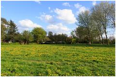 Springtime: nature calls (H. Bos) Tags: flowers sky nature water spring natuur lucht lente bloemen springtime almere almerehaven