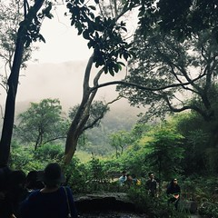 (yihan0912) Tags: forest explore forestparty dailyshoot vsco instadaily instagood vscotaiwan