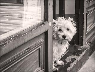 365-107 Puppy Dog Eyes