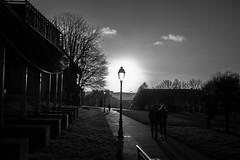 Sunny street Lamp