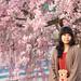 IMG_0072 枝垂桜