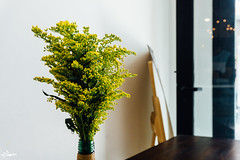 Green on your table (iSam's) Tags: flowers light portrait sky plants green chicken nature yellow self gold ginger yummy wings dish sweet sauce flash things ceiling shelf meal bulbs setup 16 soda 50 sour decor decorate shelves hdr a6000 kít