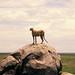 TZ Serengeti NP 0202 031