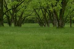 Pecan Orchard in Spring (Get The Flick) Tags: barnesvillega flintriverarena