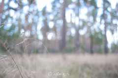 _DSC6025KirstenEggers (Kiki m. E.) Tags: grass forest out focus wald unscharf diffuse grser