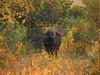 Grumpy Buffalo (3sth3r) Tags: bufallo marlothpark jackalberryridge