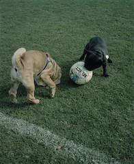 07 (Anders Hviid) Tags: 2 denmark football den if danmark serie ermitage tif fodbold dyrehaven kongelige nonleague sletten taarbk idrtsforening taarfosis