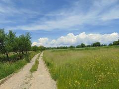 iarba verde de acas (bseteanu) Tags: verde green nature grass rural landscape may natura mai iarba maramures peisaj