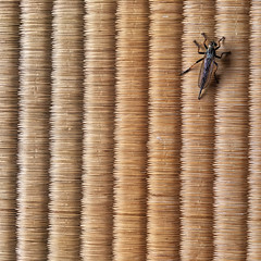 Jiko-in Temple Visitor For Tea (KellarW) Tags: japan insect square fly tea tatami matcha tatamimat
