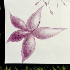 Shading shading shading... I love doing this (borianag) Tags: flowers flower art floral illustration pencil sketch drawing drawings doodle doodles sketches doodling pencildrawing instagram ifttt
