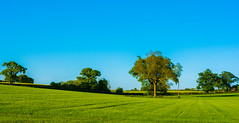 Back For A Second Viewing (williamrandle) Tags: uk trees light england green field landscape spring nikon shadows outdoor bluesky farmland crops serene westmidlands 2016 ashwood kingswinford d7100 sigma1835f18art