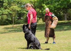 2016-05-22, IPO Training-34 (Falon167) Tags: dog shepherd josh rhonda german miles gsd germanshepherddog