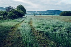 Summer ahead (mripp) Tags: summer sky green art beautiful grass germany relax landscape bayern deutschland bavaria sommer kunst relaxing gras grn landschaft regenstauf