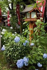 Chouken-ji  (PV9007 Photography) Tags: japan season temple canal kyoto line southern rainy    kansai  keihan kintetsu tempel  fushimi ajisai momoyama 2016 6 gekkeikan  tsuyu  chushojima  choukenji chokenji sdkyoto