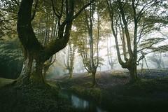 A forest of light (www.leireunzueta.com) Tags: longexposure morning trees light mist mountains nature sunshine fog forest river landscape visuals bizkaia euskadi basquecountry wander gorbea kodakportra vsco otzarreta vscofilm liveauthentic