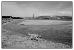 Golden gate bridge (kodack26) Tags: blackandwhite noiretblanc goldengate californie