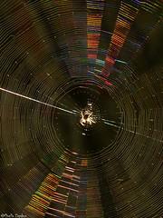 Spiderweb (Geminiature Nature+Landscape Photography Mallorca) Tags: spinneweb spiderweb araa tela colores kleuren colours mallorca