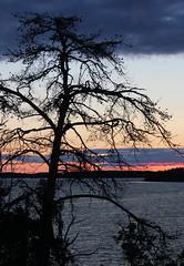 Night mood (Joni Mansikka) Tags: sea summer tree nature silhouette night suomi finland landscape colours outdoor dusk balticsea archipelago naantali