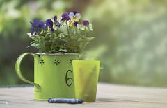 6 (rockinmonique) Tags: light flower green canon bokeh petal alberta bloom crayon pansies tamron blossum ellisbirdfarm moniquew