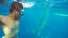 whale shark viewing & tumalog falls (17 of 26) (Rodel Flordeliz) Tags: sea water swimming snorkeling freediving cebu whaleshark gentlegiants opensea butanding oslob southofcebu whalesharkviewing