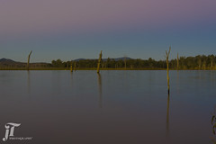Lake Somerset (jadyn2014) Tags: lakesomerset somerset lake queensland australia mountain dawn trees deadtrees sky outdoors nikon nikond750 d750 water