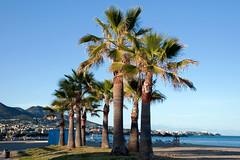Palm Trees, Fuengirola, Andalusia, Spain (rmk2112rmk) Tags: palmtrees fuengirola andalusia spain palmtree palm tree arecaceae sunset beach mediterrean