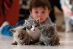 Alessio (Andrea Brocca) Tags: portrait cats cat portraits nikon bimbo f18 18 gatto 85 ritratti gatti gattoni alessio beb 85f18 d300s andreabrocca
