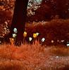 (bill bold II) Tags: holland 120 film mediumformat europe infrared yashicamat124g homedeveloped kodakeir colourinfrared tetenal kodakaerochrome