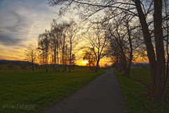Alley to the sun (pixadeleon) Tags: trees sunset field yellow clouds colours gras colourful katzensee katzenbach büsisee challengeyouwinner