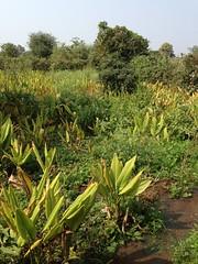 biodiverse farming