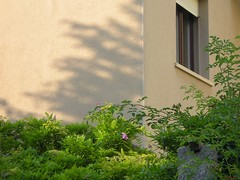 Untitled (David K. Marti) Tags: street city light shadow urban sunlight house plant color colour detail building window leaves architecture facade corner outside outdoors daylight bush colorful exterior outdoor branches structure architectural growth hedge colored growing shrub structural