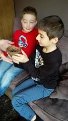 Vogelspin van Exotus Serpenti