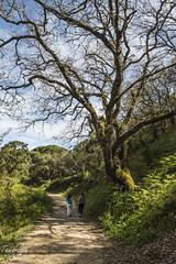 """""""El que nos encontremos tan a gusto en plena naturaleza proviene de que ésta no tiene opinión sobre nosotros."""" (Tamariita Gómez) Tags: naturaleza verde nikon paisaje paseo campo sanroque magia armonía tranquilidad d3200 pinardelrey"""