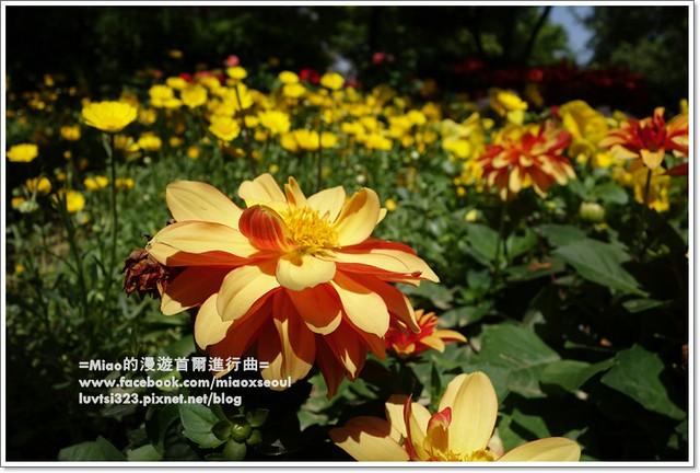 고양국제꽃박람회015