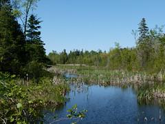 Wetlands (Toats Master) Tags: lake water river spring lilac kawarthas balsamlake