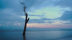 Lone tree (jipan) Tags: tree beach clouds sunrise borneo balikpapan