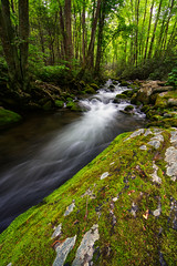 Roaring Fork Whitewater (Travis Rhoads) Tags: mountains whitewater tennessee rivers roaringfork 2016 landscapephotography flowingwater greatsmokymountainnationalpark roaringforkmotortrail canonef14mmf28liiusm trphotostudio nikcollectionbygoogle travisrhoadsphotography copyright2016 metaboneseftoeivt sonyilce7rm2a7rii