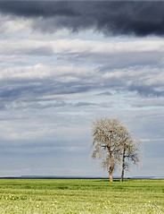 Tierra de campos, Castilla-Leon. (mmontesfotografo) Tags: landscape landscapephotography camposdecastilla