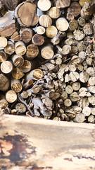 Textura madera (fraguas.martin) Tags: wood naturaleza texture textura nature madera lamber