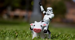 Bucking Cow (aaron.kudja) Tags: toy star cow stormtrooper wars revoltech