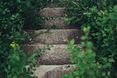 Ancient stairs (Frostroomhead) Tags: plants green art nature overgrown leaves stairs nikon f14 sigma 30mm d5200