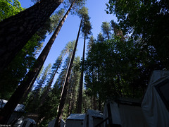 Yosemite-6090259.jpg (acnomad) Tags: california us unitedstates yosemitevalley