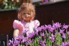 Lavendel stellt sich vor ... (Kindergartenkinder) Tags: kindergartenkinder gruga park essen sony ilce6000 annette himstedt dolls personen annemoni lavendel