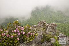 The Camel, Table Rock, Linville Gorge NC (cathyandersonphoto) Tags: fog spring northcarolina azalea blueridgemountains springflowers linvillegorge pisgahnationalforest punctatum westernnc linvilleriver burkecounty linvillegorgenc carolinarhododendron